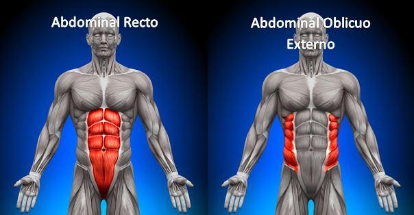 abdominal recto   en busca de nutrición
